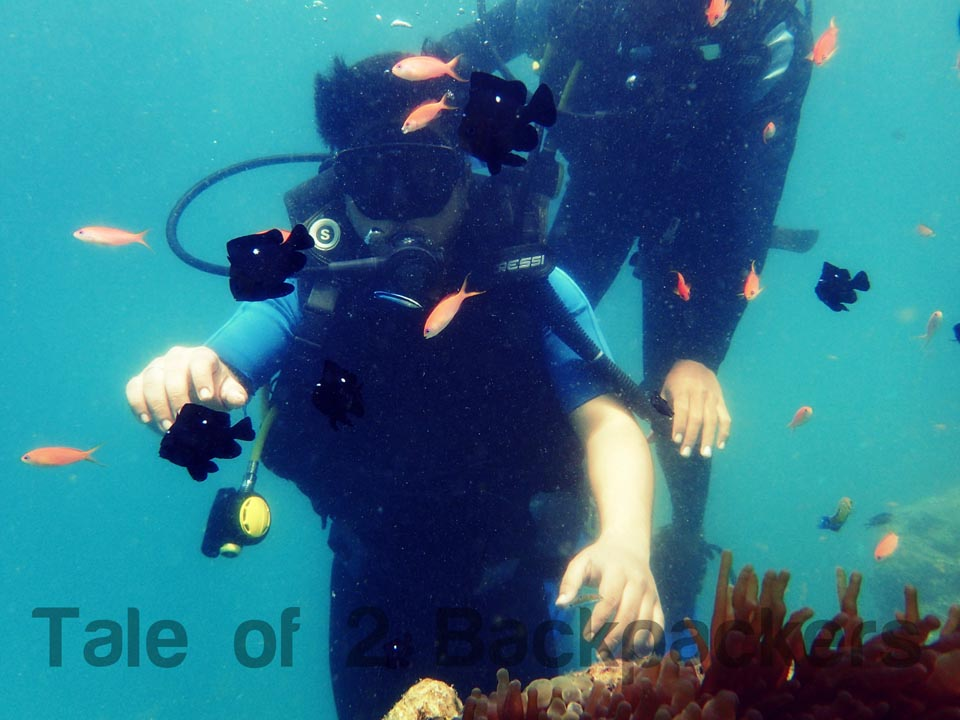 scuba diving experience at Andaman