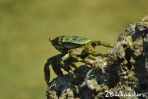 marine life at Shaheed Dweep Andaman