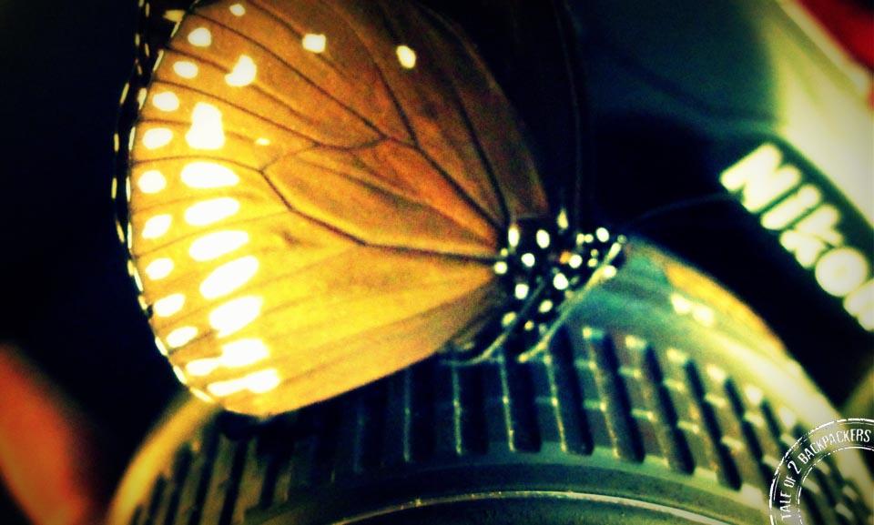 Capturing butterflies