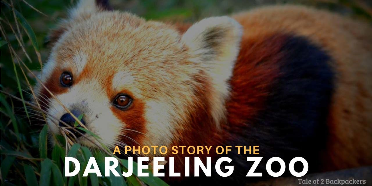 A Photo story of the Darjeeling Zoo