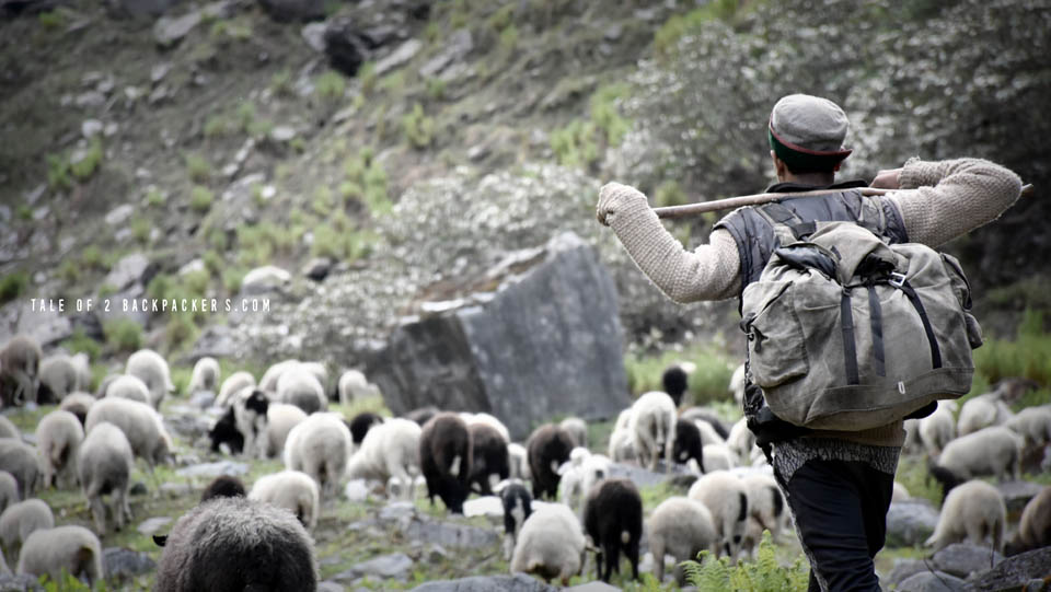 'Santiago' with his sheep