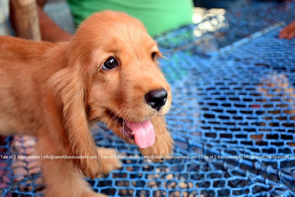 Galiff Street Pet Market