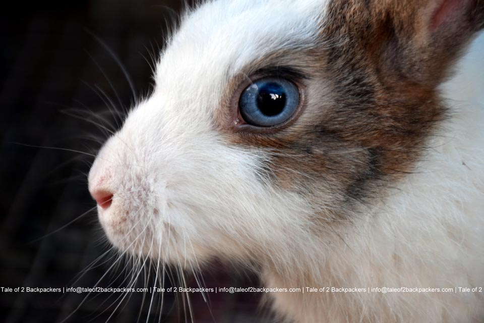 Places to buy pets in Kolkata
