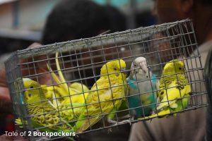 Caged birds at Galiff Street Bird Market in Kolkata