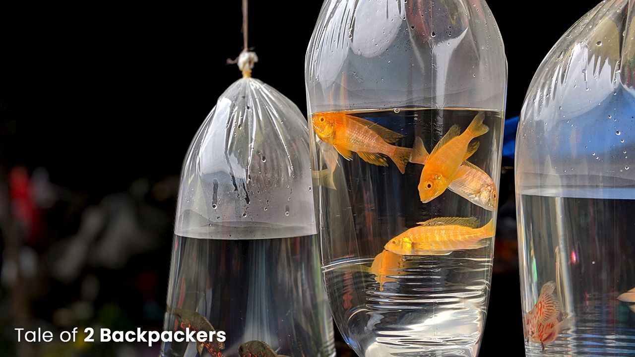 Fishes and aquariums for sale