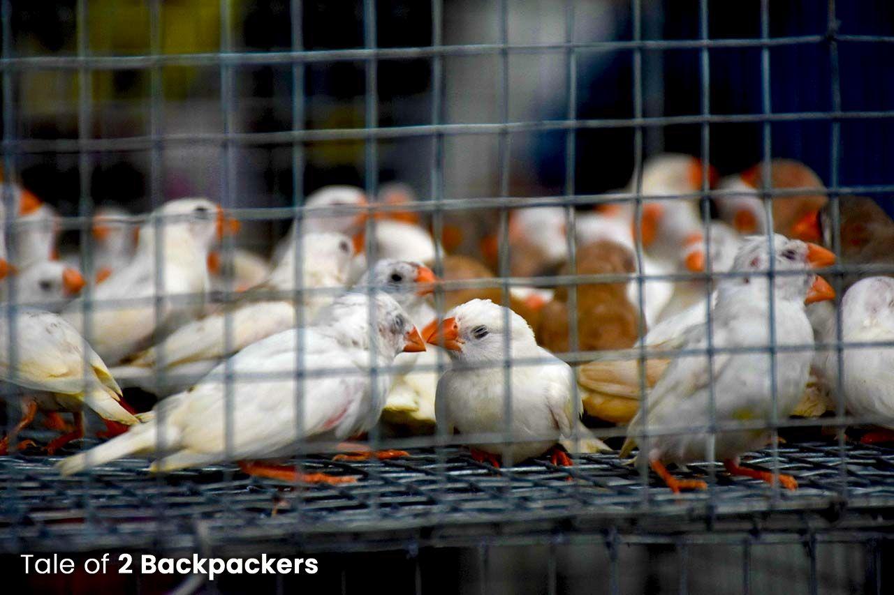 Birds at the bird market in Galiff Street near Bagbazar