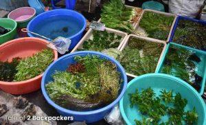 decorative plants for aquarium sold here