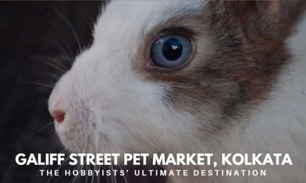 Galiff Street Pet Market, Kolkata – the hobbyists' ultimate destination