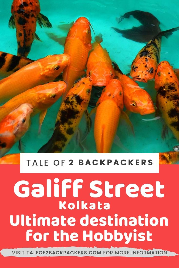 Kolkata Pet Market