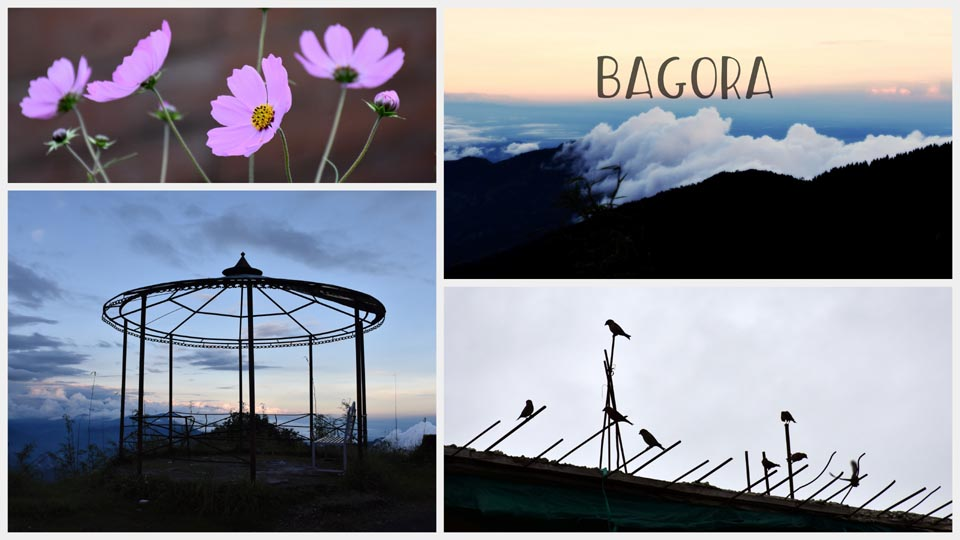 Bagora