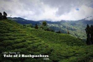 Things to do in Darjeeling - visit a Darjeeling Tea Garden