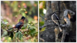Birds of Latpanchar - Bird watching destination in West Bengal