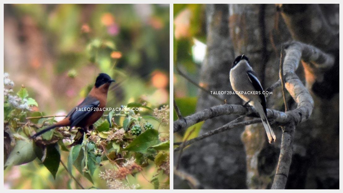 Birds of Latpanchar - Bird watching destination in West Bengal