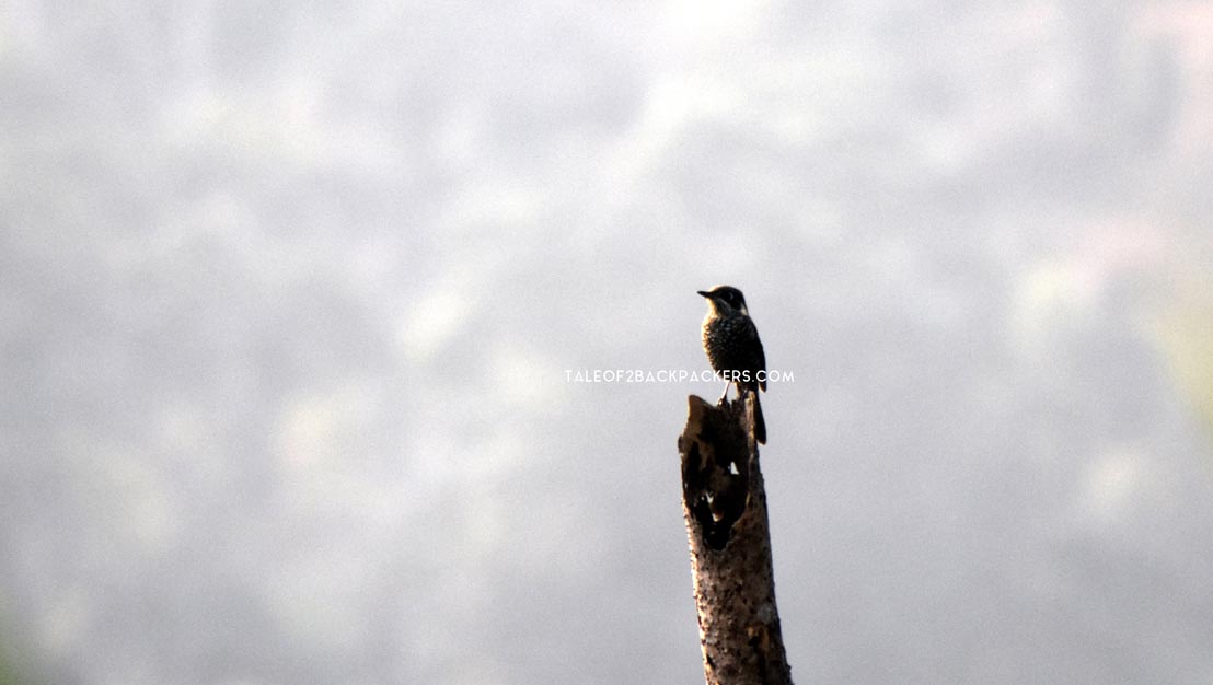 Birds of Latpanchar