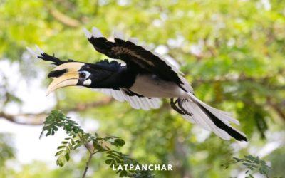 Latpanchar and Ahaldara – Birds, Nature and More