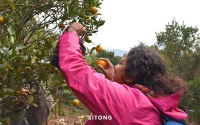Sitong – The Orange Village