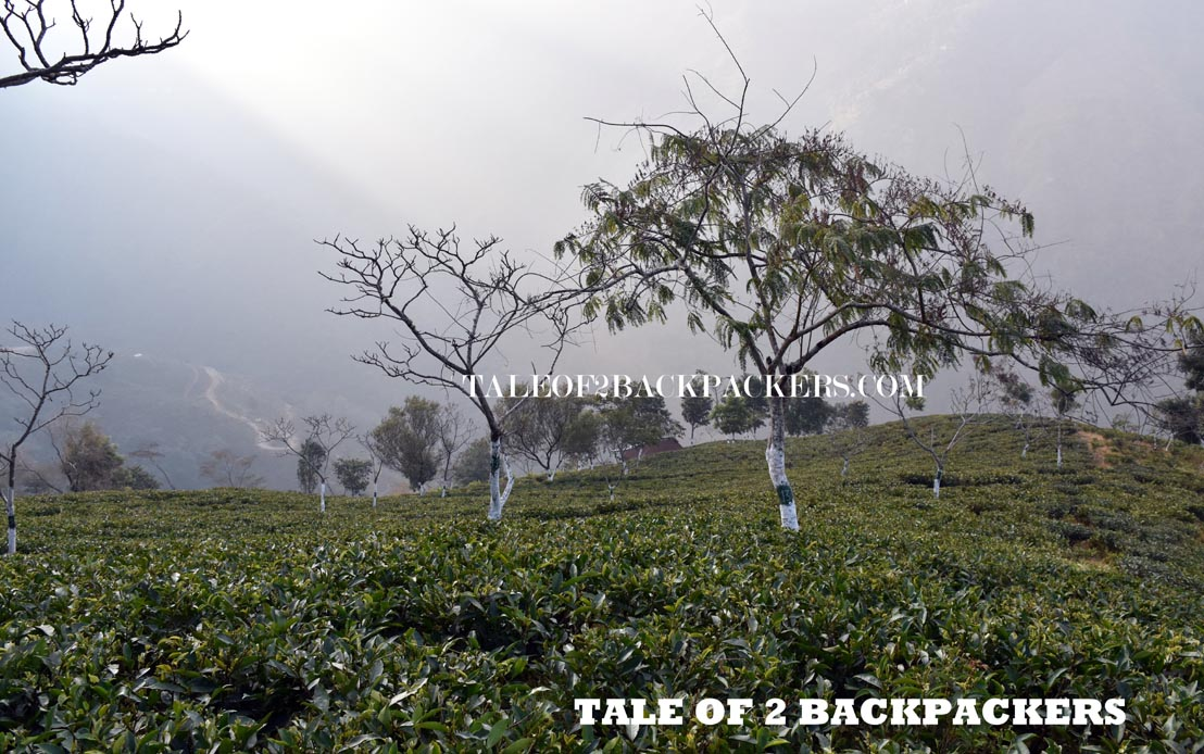 Rangaroon