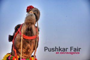 Pushkar Camel Fair, Rajasthan Tourism