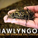 Mawlyngot – where tea changed the lifestyle!