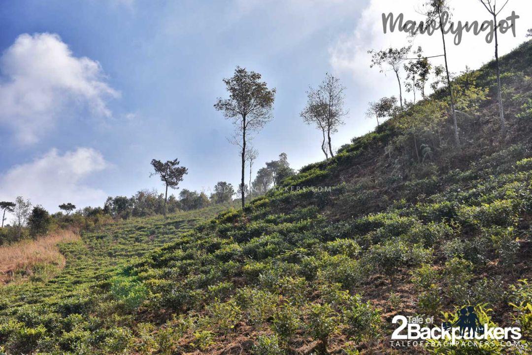 Mawlyngot Offbeat places in Meghalaya