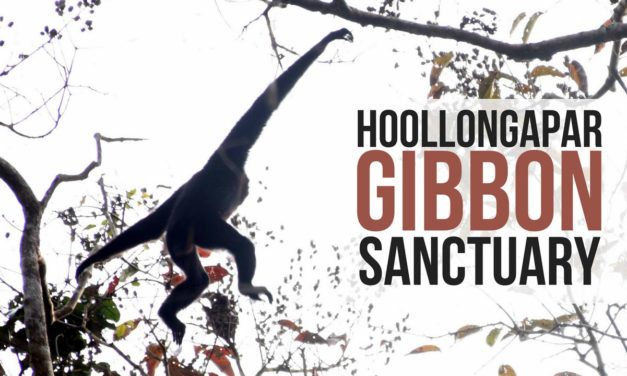 A complete Guide to Hoollongapar Gibbon Sanctuary