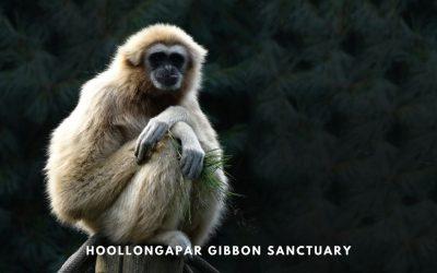 A complete Guide to Hoollongapar Gibbon Sanctuary