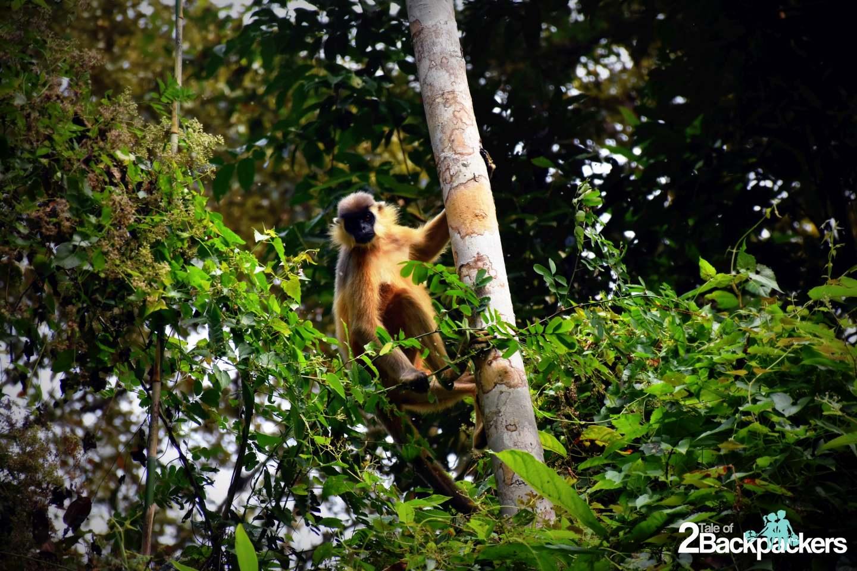 hoollongapar gibbon sanctuary Jorhat Assam Wildlife at Assam