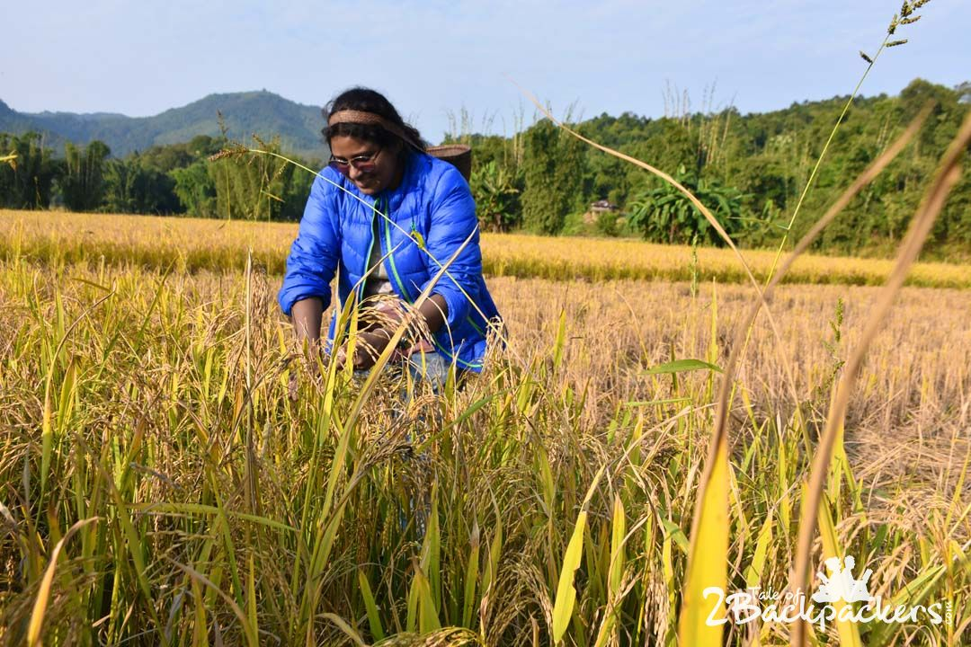 Experience at Bascon, basar, Arunachal Pradesh Tourism