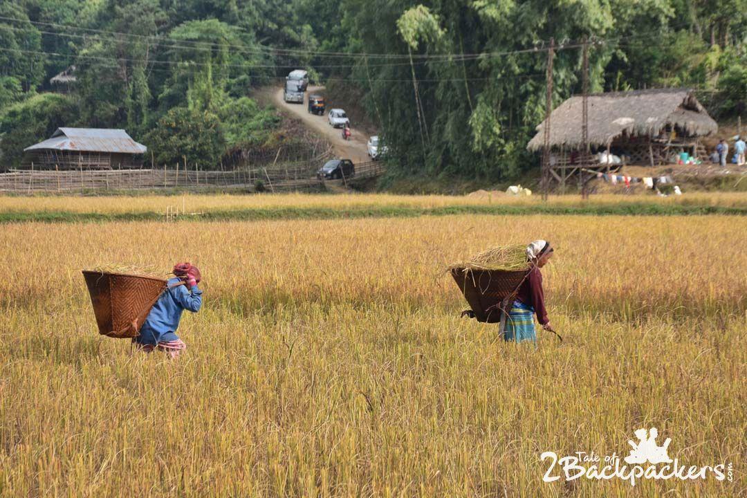 CultivationBascon_Basar_Arunachal Pradesh