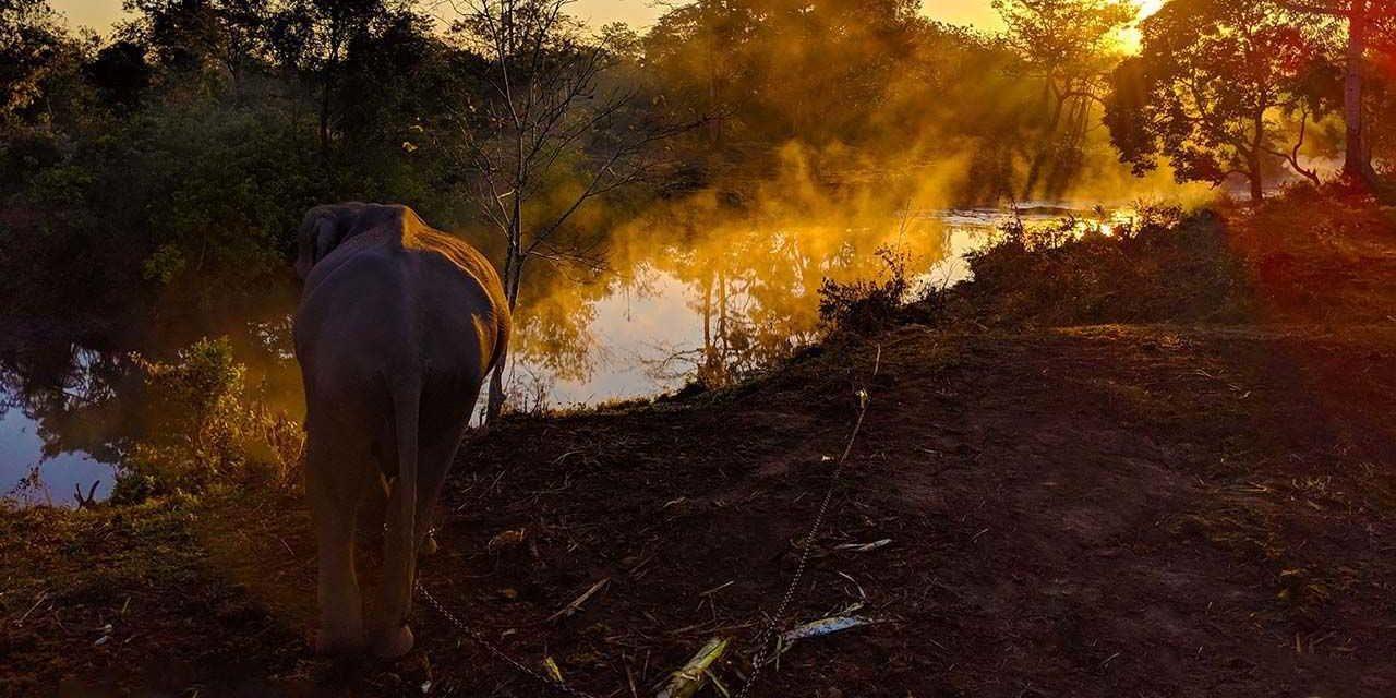 Manas Maozigendri Ecotourism society – from poachers to protectors