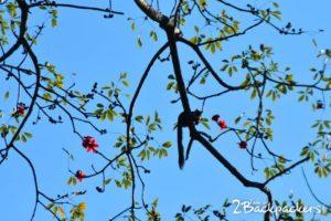 Manas National Park-Assam