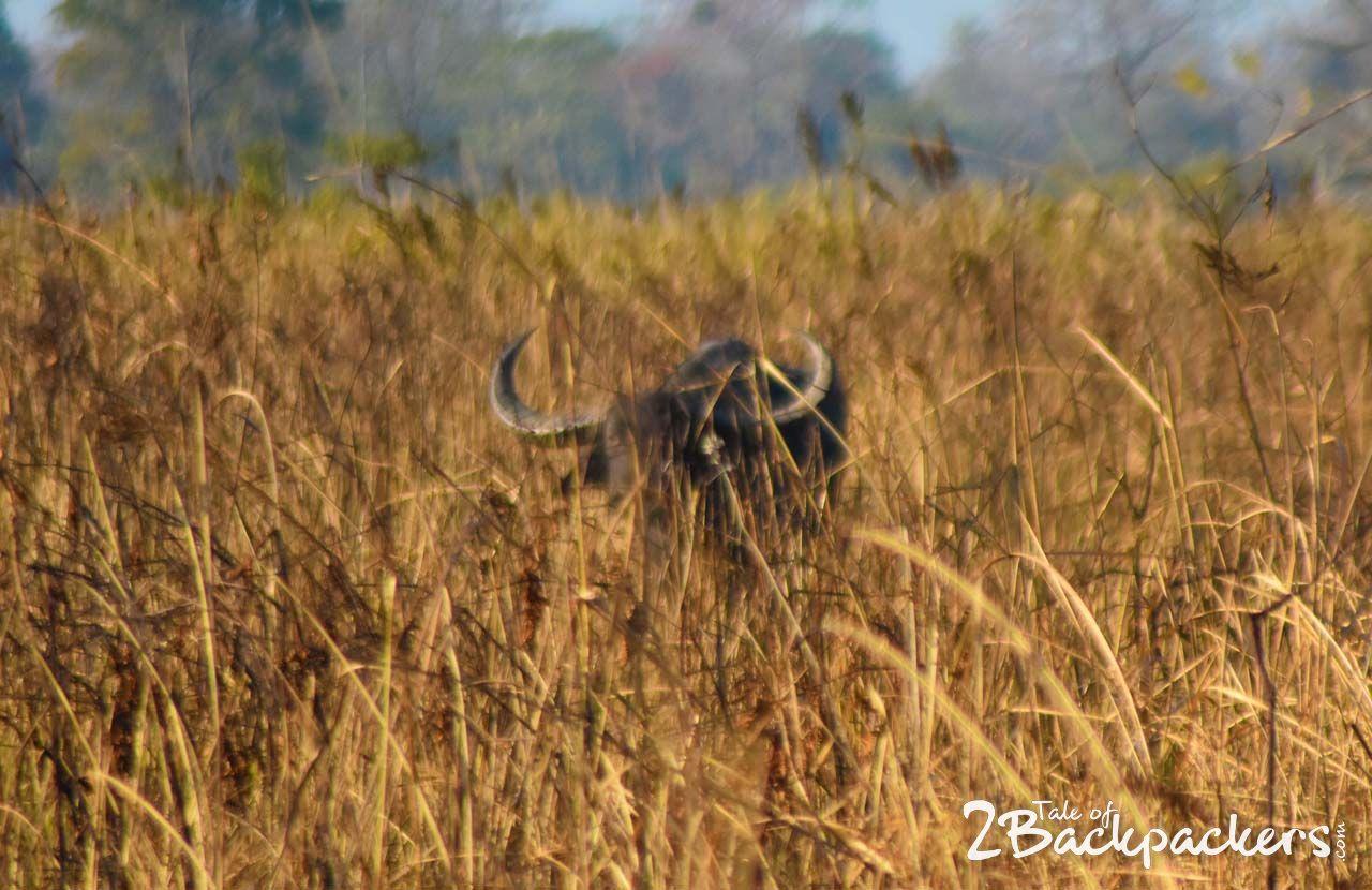 Manas-National-Park-Bodoland
