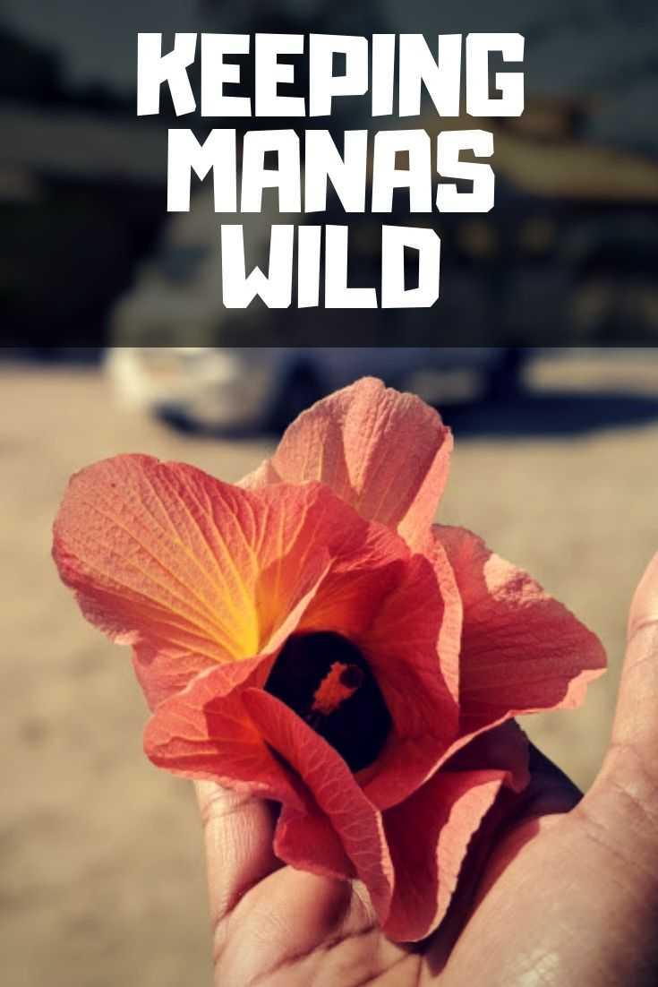 Manas National Park MMES
