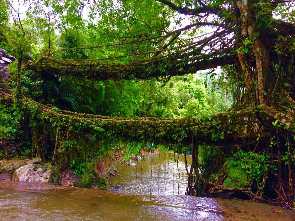 Trek to the Double Decker Living Root Bridge _ Things to do at Cherrapunji