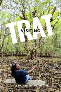 mangrove forest at trat
