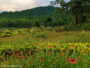 Butterfly Garden, Daringbadi