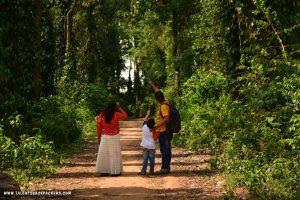 Coffee and spice plantations at Daringbadi
