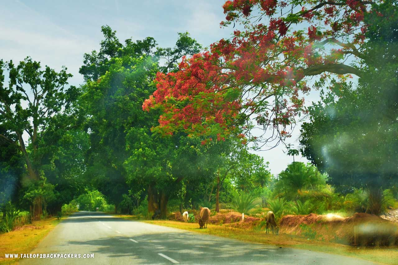 Roads towards Daringbadi