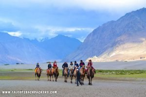Double humped camel safari at Nubra Valley