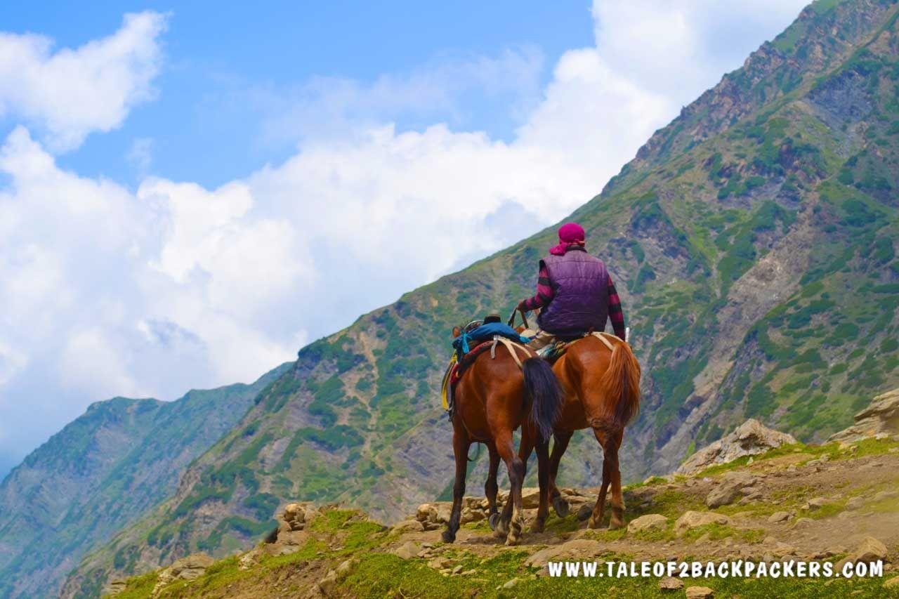 horses in Amarnath Yatra