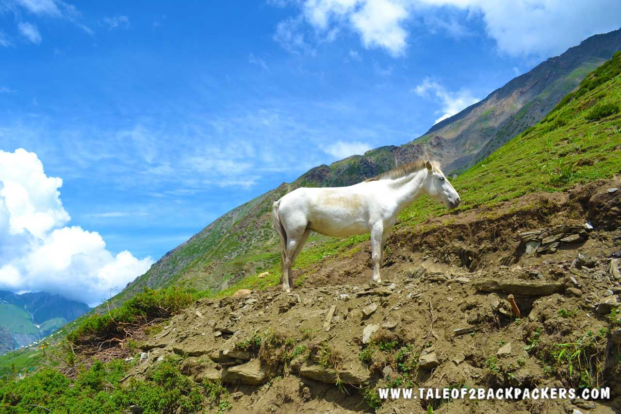 wild horse standing on the mountain