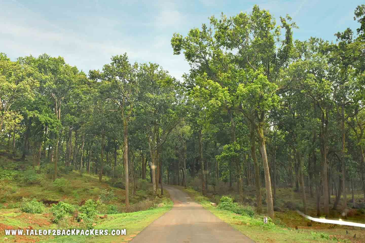 Road towards Mainpat - Chhatisgarh Tourism