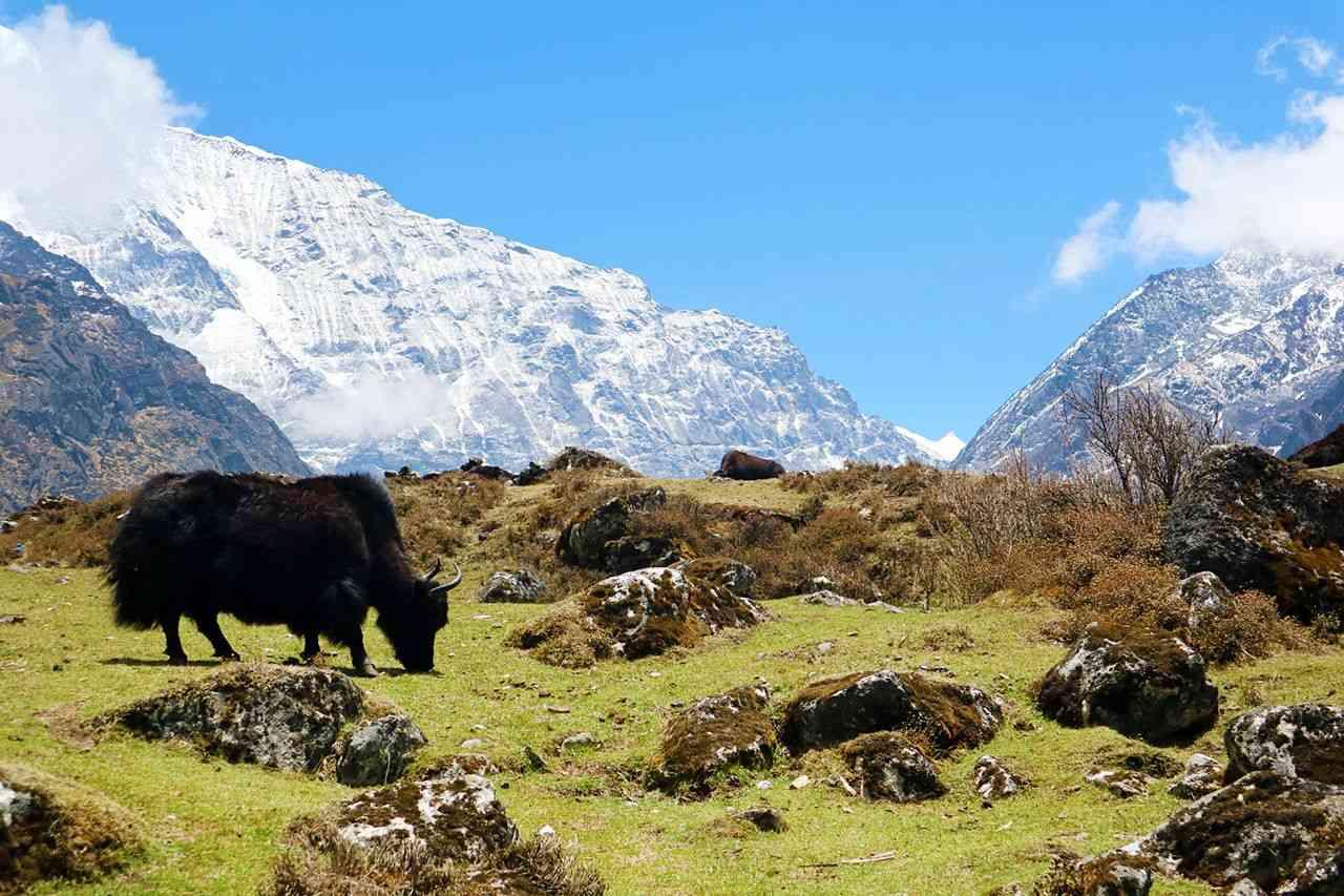 Tsho Rolpa Lake Trek Nepal