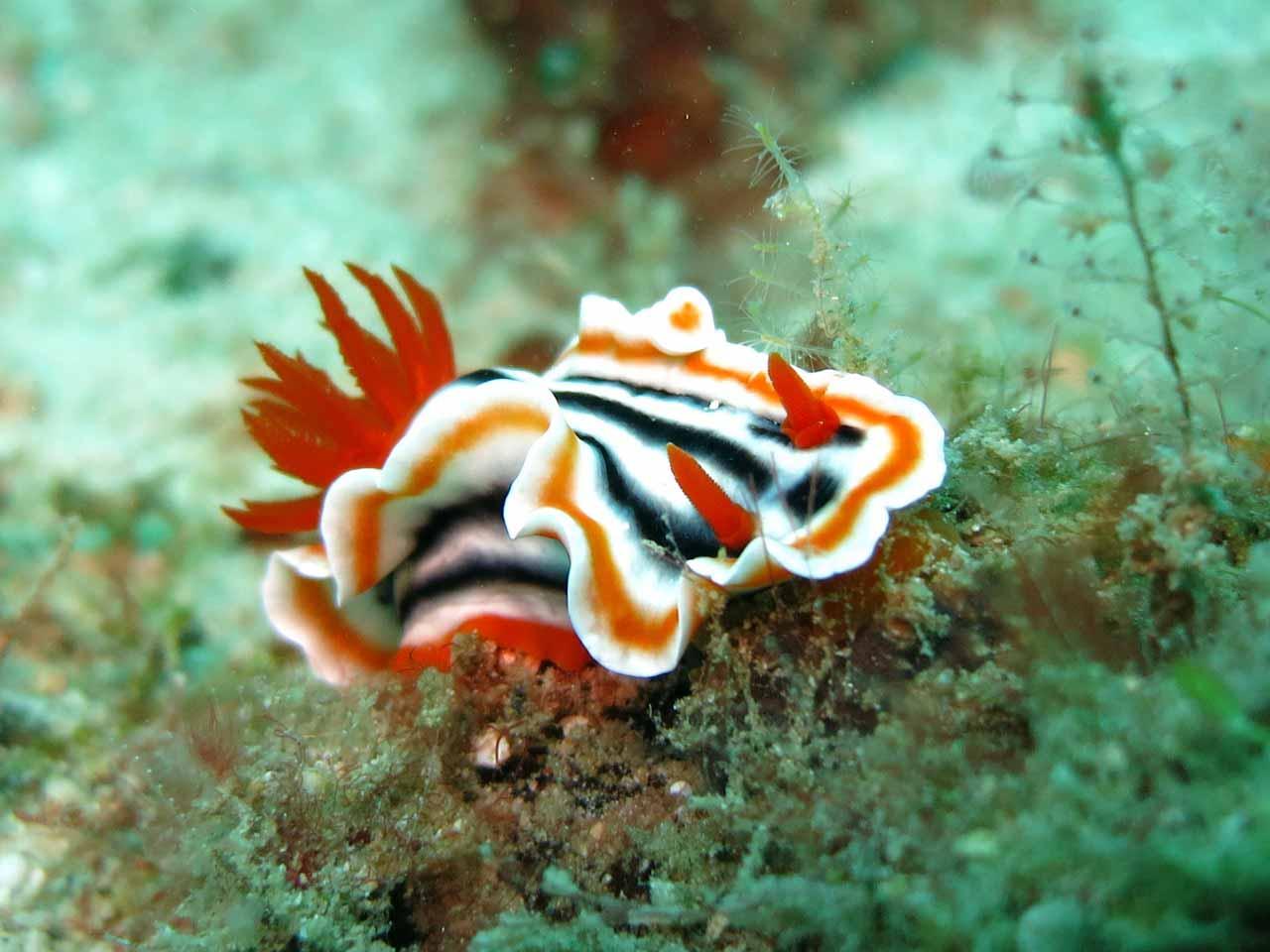 marine life at philippines