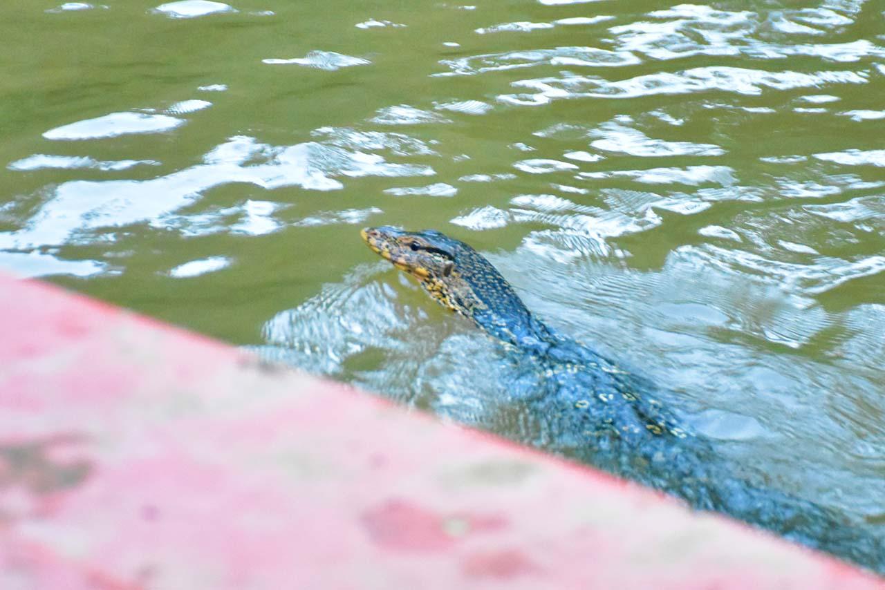 Snake at Gomti River in Tripura