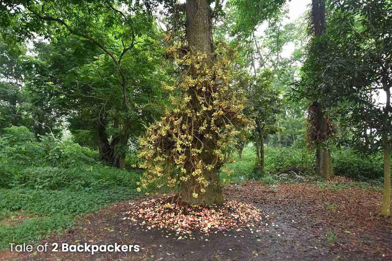 Flora and fauna at Botanical Gardens Shibpur - Kolkata Travel Guide