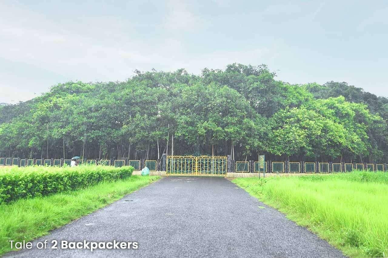 The Great Banyan Tree at Shibpur Botanical Gardens in Kolkata