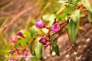 Flowers on the trekking trail of Mawrynkhang trek - offbeat Meghalaya