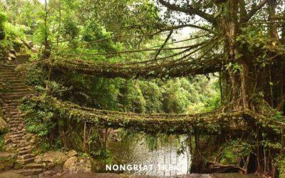 Nongriat Trek – Guide to Double Decker Root Bridge & Rainbow Falls