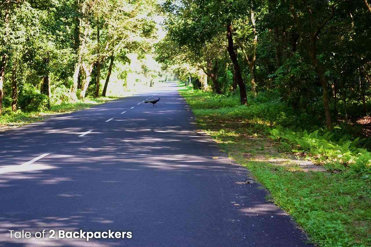 Road from Rajabhatkhawa to Jayanti